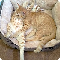 Adopt A Pet :: Cheeto and Frito - Arlington/Ft Worth, TX