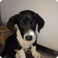 Adopt A Pet :: Baby Wilbur - Rockville, MD