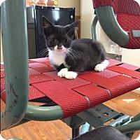 Adopt A Pet :: RPh - Homewood, AL