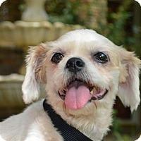 Adopt A Pet :: Precious - Lafayette, LA