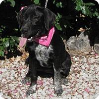 Adopt A Pet :: Lucille - Oakland, AR
