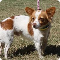 Adopt A Pet :: Robin - Poughkeepsie, NY
