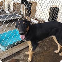 Adopt A Pet :: Sassy - Zaleski, OH