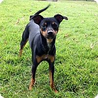 Adopt A Pet :: Libby - Richmond, KY