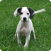 Adopt A Pet :: Peanut/Paisley - Ortonville, MI