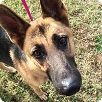 Adopt A Pet :: Luca (Cat Tolerant) - Nashua, NH
