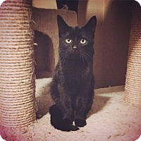 Adopt A Pet :: Oscar - St Clair Shores, MI