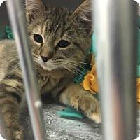 Adopt A Pet :: Greenlee - Kansas City, MO