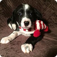 Adopt A Pet :: Benny - Kittery, ME