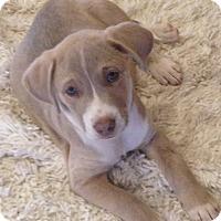 Adopt A Pet :: Ridge - Westport, CT
