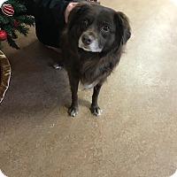Adopt A Pet :: Rory - Downingtown, PA