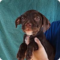 Adopt A Pet :: Paloma - Oviedo, FL