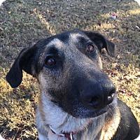 Adopt A Pet :: Gunter (bonded to Greta) - Greeneville, TN