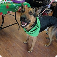 German Shepherd Dog Mix Dog for adoption in Winnipeg, Manitoba - BUDDY