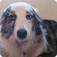 Adopt A Pet :: Minnie - Glenwood, GA