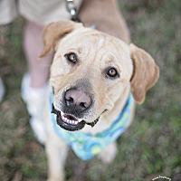 Adopt A Pet :: Maximo - Kingwood, TX