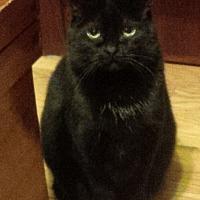 Adopt A Pet :: Lola - Toronto, ON