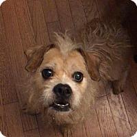 Adopt A Pet :: Diplo - Newport, KY