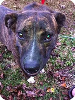 American Pit Bull Terrier Mix Dog for adoption in Vidor, Texas - Maizie