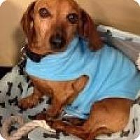 Adopt A Pet :: Skippy - Atascadero, CA