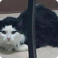 Adopt A Pet :: Gixie (aka Pikie Sticks) - Ennis, TX