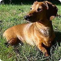 Adopt A Pet :: Romeo - Toronto, ON