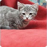 Adopt A Pet :: Alexi - Scottsdale, AZ
