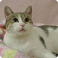 Adopt A Pet :: Lolli - Foothill Ranch, CA