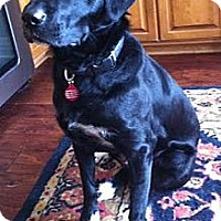 Adopt A Pet :: Blackie - Minnetonka, MN