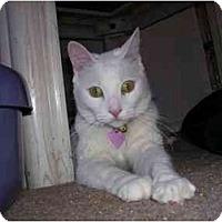 Adopt A Pet :: Bunny - Scottsdale, AZ