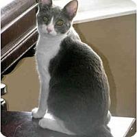 Adopt A Pet :: Fiona - Xenia, OH