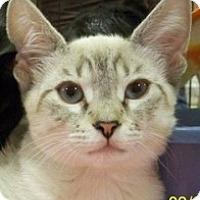 Adopt A Pet :: Sassy V - Sacramento, CA