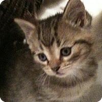 Adopt A Pet :: Teagan - Toronto, ON