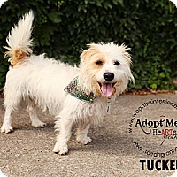 Adopt A Pet :: Tucker - Omaha, NE