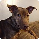 Adopt A Pet :: Sassy