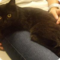 Adopt A Pet :: Tarzan-$35.00 - Buford, GA