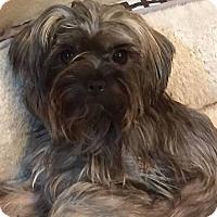 Adopt A Pet :: Fifa - ROME, NY