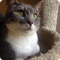 Adopt A Pet :: Marble - Waco, TX