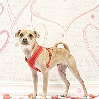 Adopt A Pet :: LP - Adoption Pending - West Allis, WI
