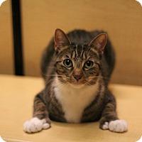 Adopt A Pet :: Stella - Richmond, VA