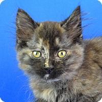 Adopt A Pet :: Sheeba - Carencro, LA