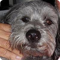 Adopt A Pet :: WILLIE (CP KW) - Tampa, FL