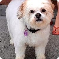 Adopt A Pet :: BEATRICE (video) - Los Angeles, CA