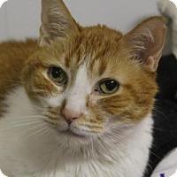 Adopt A Pet :: Calvin - Indianapolis, IN