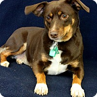 Adopt A Pet :: Keeley - Wichita, KS