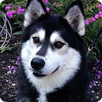 Adopt A Pet :: Milk - Fennville, MI