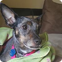 Adopt A Pet :: Asia - Omaha, NE