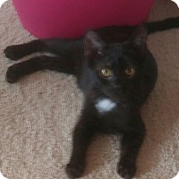 Adopt A Pet :: Asia 14 weeks old - Virginia Beach, VA
