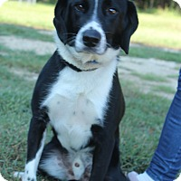 Adopt A Pet :: Russell - Waldorf, MD