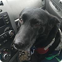 Adopt A Pet :: Tempest - Alden, NY